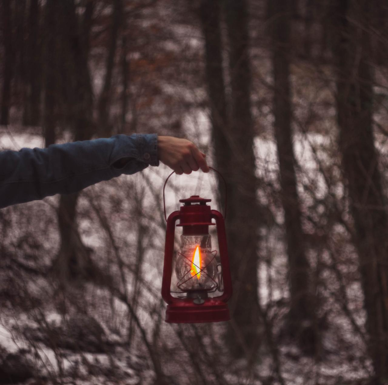 Hand holding lantern in a forest